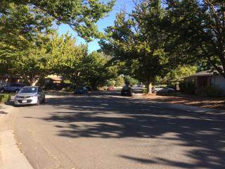 Treelined-street