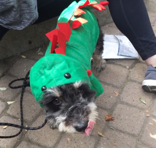Sweet little Ezra in his dinosaur costume