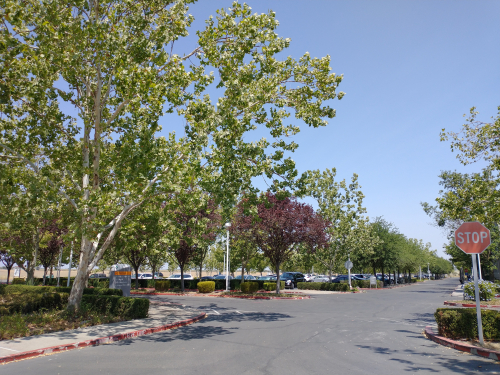 Sutter Parking Lot Shade Trees 1